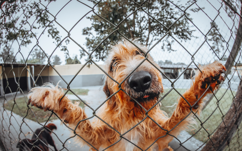 Portable dog fences for camping UK