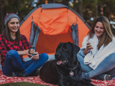 best sleeping bags for dogs