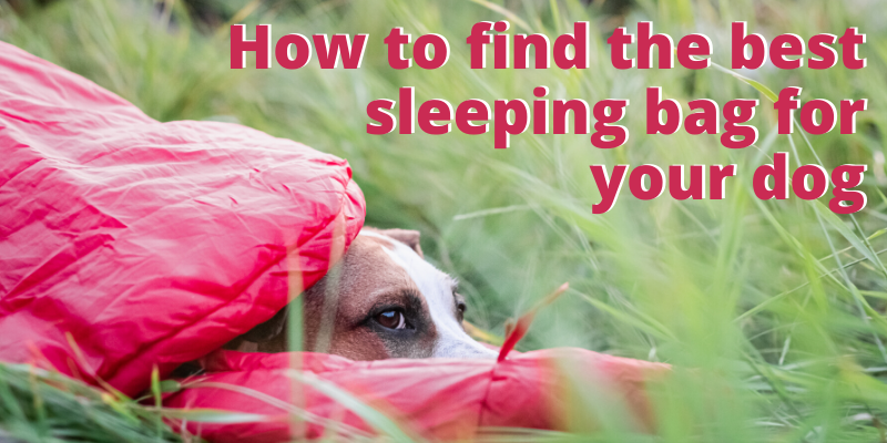how to find the best sleeping bag for your dog