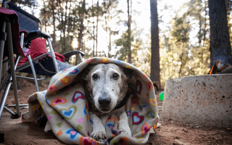 camping with dogs in the cold
