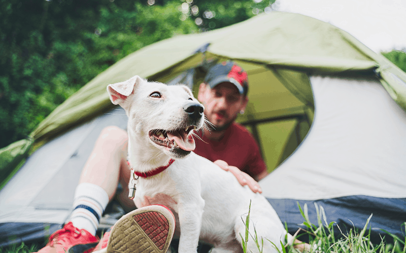 how to keep your dog warm when camping