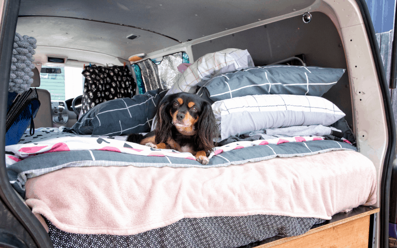 keeping your dog warm when camping