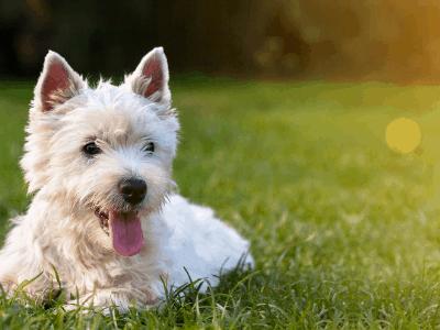 best-dog-play-pen