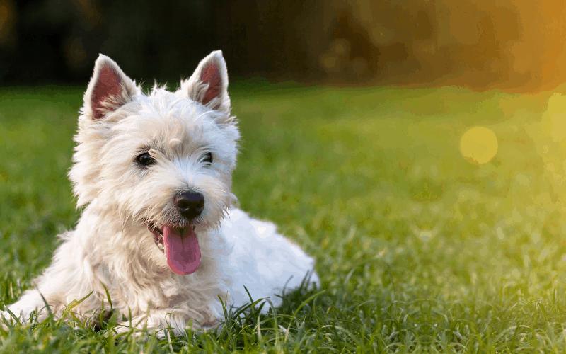 best-dog-playpen