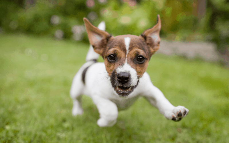 best-dog-playpens