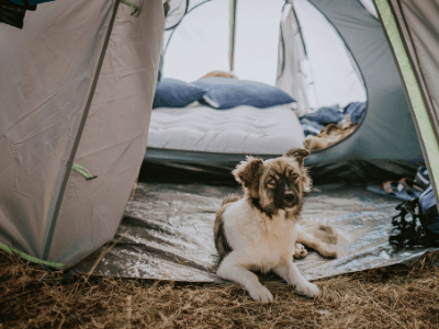 best-tent-for-camping-dog